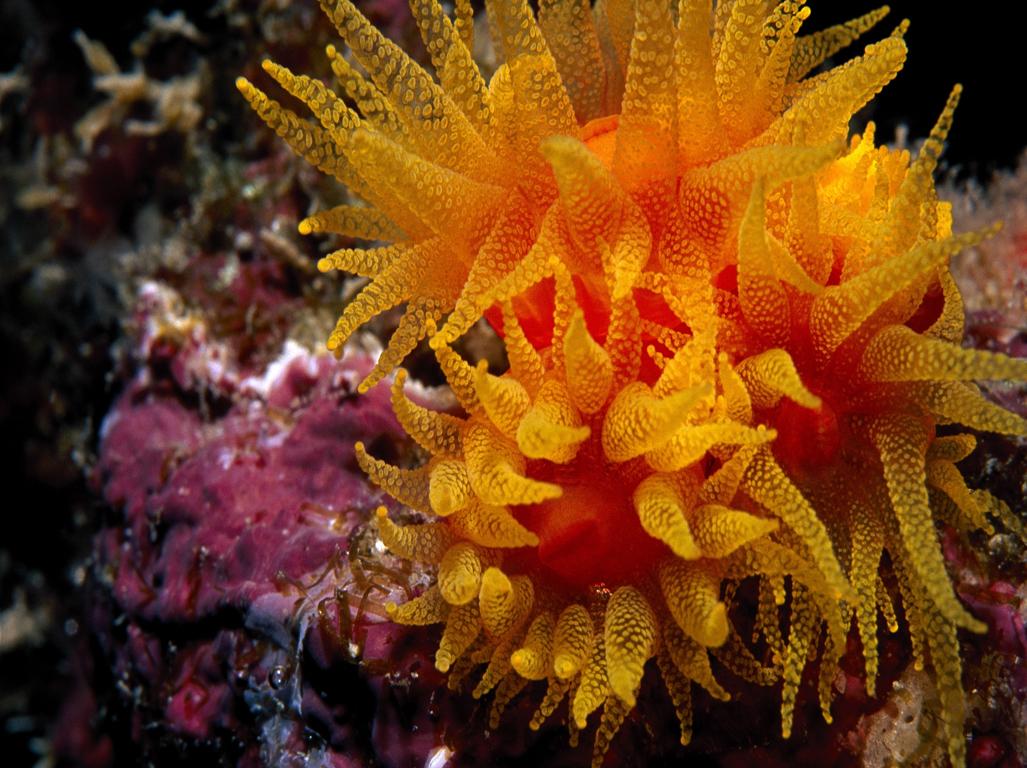 подводный мир фото осьминог